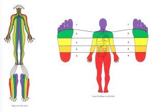 1958441 orig 1 300x219 - تاثیر رفلکسولوژی در بدن چگونه است؟