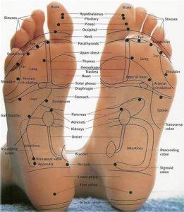 Reflexology Foot Chart 102 261x300 - رفلکسولوژی چیست؟