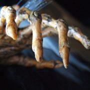 ناخن هایی که شمارا یاد جادوگر شهر اوز می اندازند