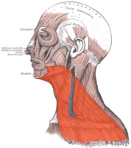 neck botox injection - هر سوالی درباره بوتاکس دارین جوابش اینجاست👌