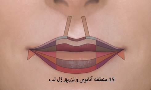 lip anatomy and filler injection sites - تزریق ژل دزفول؛ بهترین دکتر پوست دزفول کیه؟